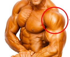 肩(三角筋)を鍛える筋トレメニュー