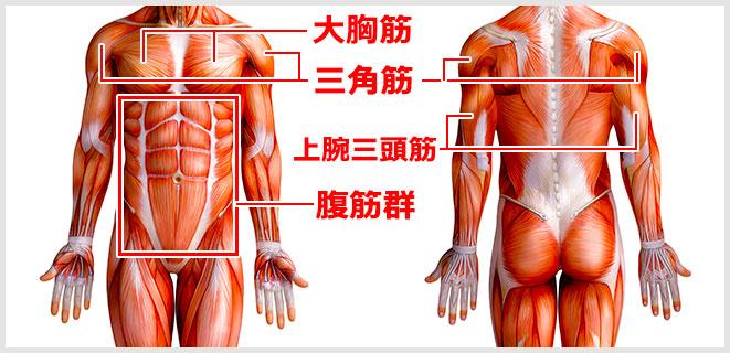 腕立て伏せで鍛えられる筋肉